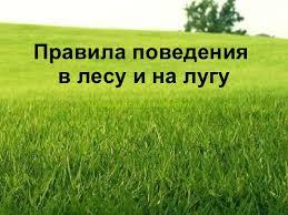 Правила поведения в лесу и на лугу  Правила поведения в лесу и на лугу Материал сайта viki rdf ru