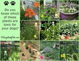 the challenges of gardening with dogs are your plants safe part iii quiz