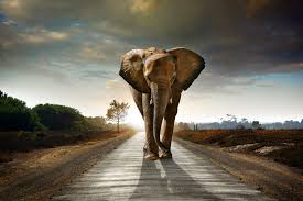 Image result for elephant awakening yoga