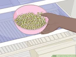 How To Sprout Mung Beans 12 Steps With Pictures Wikihow
