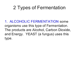 alcoholic fermentation equation in words. 23. alcoholic fermentation equation in words w