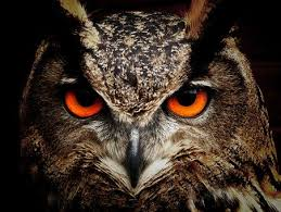 4,000 High-Quality Owl Pictures & Images [HD] - Pixabay
