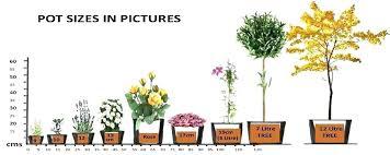 Plant Container Size Chart Developerridge Info