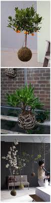 Oltre 25 fantastiche idee su appendere le piante su pinterest