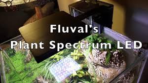Fluval Plant Nano Light New Nano Led Plant Spectrum Light From Fluval