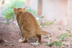 dogs and cats mating together. Wonderful Cats Cat Urinating To Dogs And Cats Mating Together S