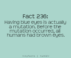 Beautiful Blue Eye Quotes Best of Quotes About Her Blue Eyes 24 Quotes
