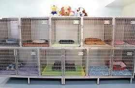 garden grove pet hospital. Boulevard Animal Hospital. 8841 Garden Grove Pet Hospital O