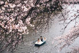 bradmelwedding cherry blossoms pre wedding phootshoot in tokyo