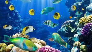 Live wallpapers, Aquarium live wallpaper