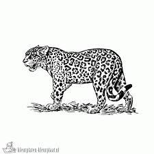 Kleurplaten Jaguar Kleurplaten Kleurplaatnl
