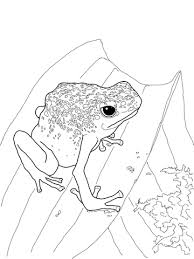 Small Picture Blue Poison Dart Frog coloring page Free Printable Coloring Pages