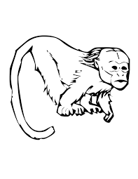 Tamarin Monkey Coloring Pages Printable Coloring For Kids 2019