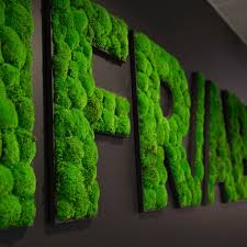 Greenmood Design Preserved Living Frame Moss In Lichen Natural Green