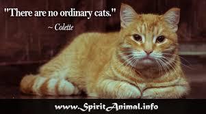 Cat Quotes Interesting Cat Quotes