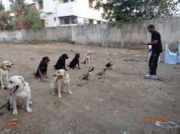 dog training in chennai