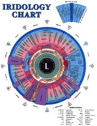 Iridology Chart For The Iris Of The Left Eye Defines The
