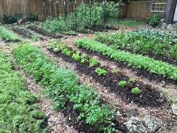 Image result for photo veggie garden