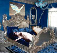 Expensive Bed Cats Lying On Expensive Bed Pictures Freaking News