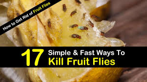how to get rid of fruit flies timg1