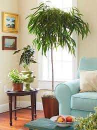 office tree. Add A Little Nature To Your Home Or Office With An Indoor Tree These Low