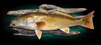 24 redfish fish replica
