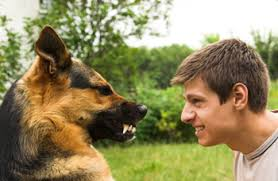 german shepherd attack victims. Interesting Attack Understanding Dog Bite Behavior Or Donu0027t Blame The When It Bites Intended German Shepherd Attack Victims
