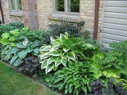 shade plants shade garden