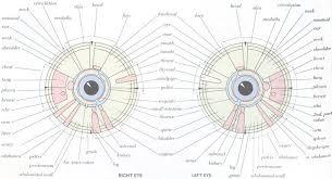 Iridology Diagnosis Chart Iridology Dr Manik G Hiranandani
