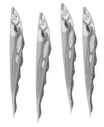 太刀魚タチウオのイラスト かわいいフリー素材集 いらすとや