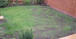 lawn damaged by pests