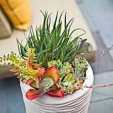 SoEasy Succulent Container Gardens  Midwest LivingSucculent Container Garden Plans