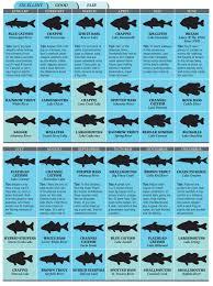 Top Spots For Arkansas Fishing In 2012
