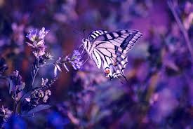 Butterfly Wallpaper HD (Page 1) - Line ...