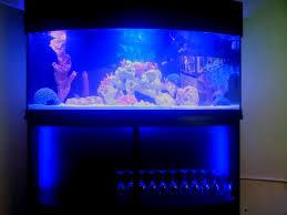 Oceanic Life Dallas Aquarium Leasing Marine Fish Aquarium