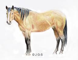 horse drawing in color.  Drawing Learn How Easy It Is To Draw A Horse To Drawing In Color