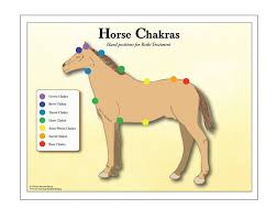 Horse Chakra Chart With Reiki Hand Positions Equine