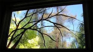 stained glass branches lake tahoe stained glass panel branches