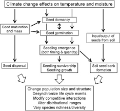 Plant Life Cycle Flow Chart Flow Chart Showing The Effects Of Climate Change On Plant