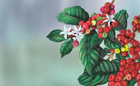 Coffee growers in lowland areas see decreasing yields, while pests that prey on coffee plants, such as the coffee bean borer, are becoming more aggressive and prevalent. Coffee Plant Stock Illustrations 20 677 Coffee Plant Stock Illustrations Vectors Clipart Dreamstime