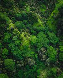 jungle wallpaper. Contemporary Wallpaper Aerial Photography Of Trees On Mountain Inside Jungle Wallpaper A