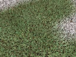 seamless grass texture game. In Nature, Grass Is Never Uniformly Distributed Over The Ground. Various External Phenomena Introduce Chaos: Kind Of Ground, Availability Water, Rocks, Seamless Texture Game