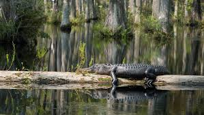 Image result for swamp images