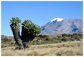 Image result for pictures of kilimanjaro