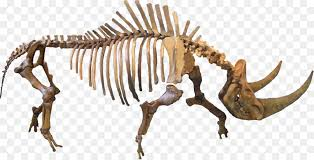 Image result for woolly rhino