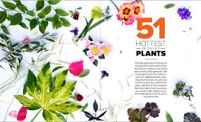 Small Picture Preview Spring Garden Design Magazine Eye of the Day Garden