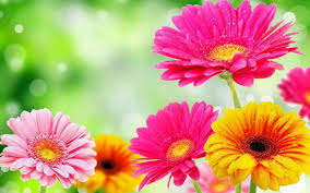 Image result for spring flowers pictures