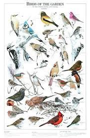 Birds Poster Bird Ikea Urmilparikh
