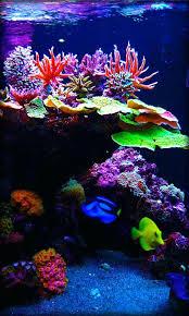 Aquarium Wallpaper Aquarium Background Wallpaper Hd