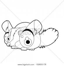 Small Picture Chinchilla Images Illustrations Vectors Chinchilla Stock